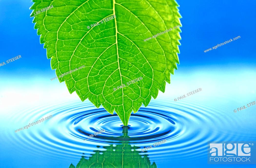 Stock Photo: Water, Waterdrop, Water drop,.