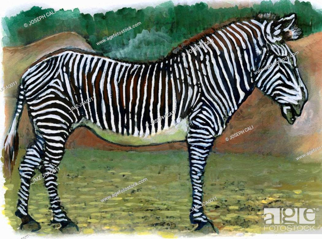 Stock Photo: An illustration of a zebra.