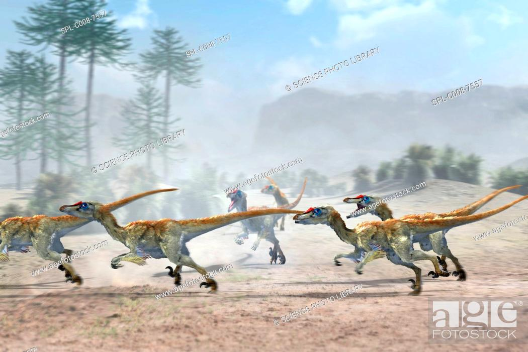 Stock Photo: Velociraptor dinosaurs. Artwork of a group of Velociraptor mongoliensis dinosaurs running in pursuit of their prey not seen.