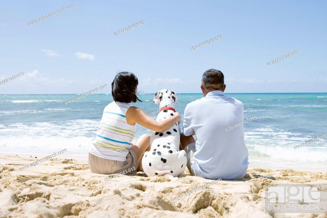 Stock Photo: Rear view of a couple sitting with dog at beach.