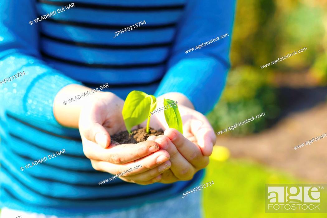 Stock Photo: Girl holding seedling.
