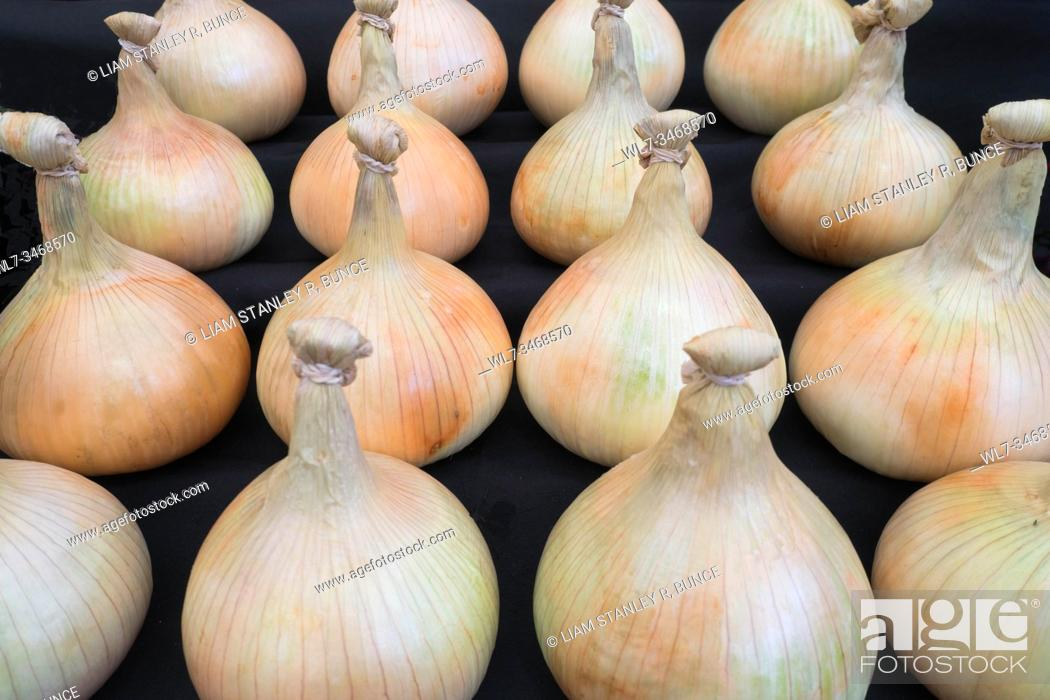 Stock Photo: Show onions dressed and on display at the Malvern Autumn Show, Worcestershire UK. September 2019.