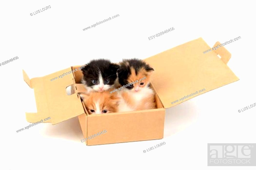 Stock Photo: Kittens in a box.