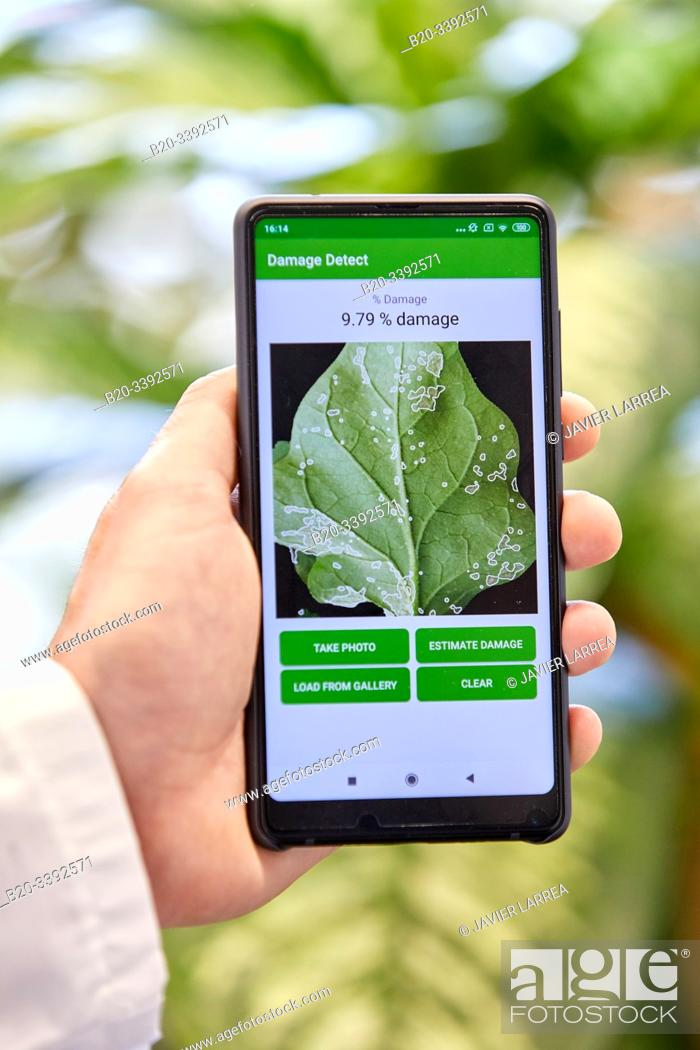 Stock Photo: App development to detect and quantify plant damage, Agricultural industry, Technology Centre, Tecnalia Research & Innovation, Derio, Bizkaia, Basque Country.