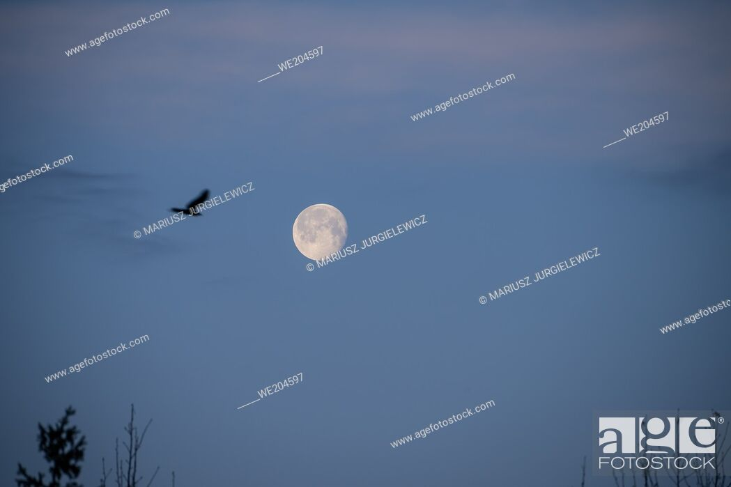 Photo de stock: Marchâ. . s full Moon goes by the name Worm Moon, which was originally thought to refer to the earthworms that appear as the soil warms in spring.