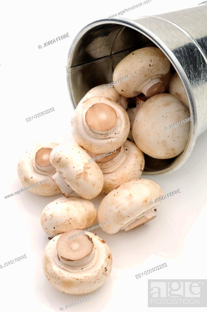 Stock Photo: Champignons in a bucket on white background.