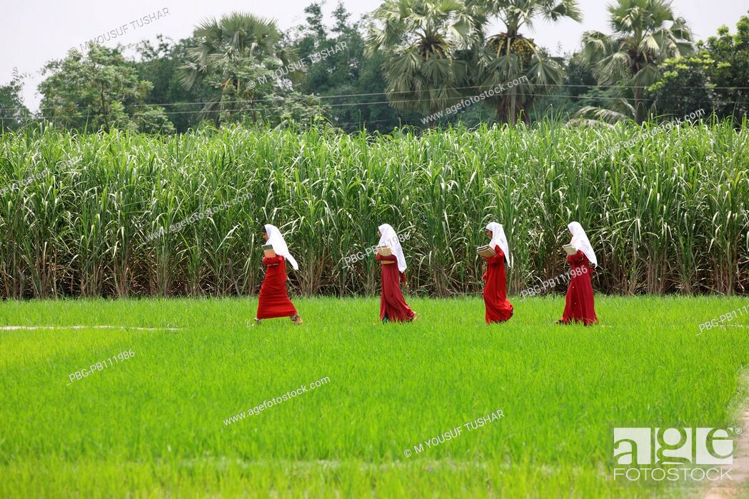 Imagen: Young girls are going to school wear Scarf, itÆs a Muslim tradition in Bangladesh.