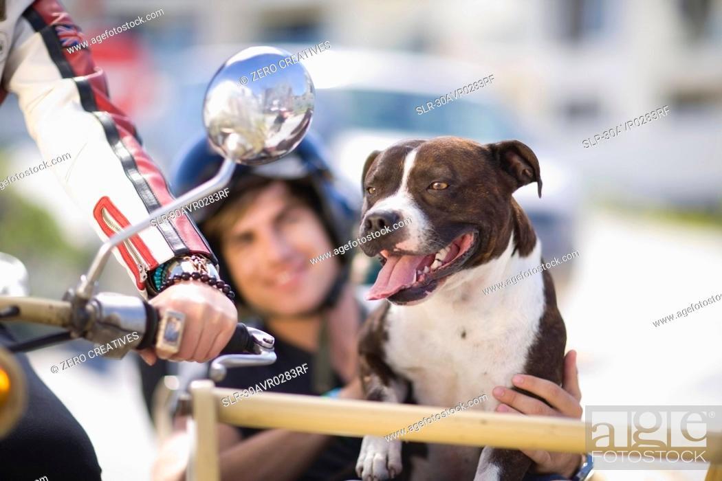 Stock Photo: Dog on a motorbike.