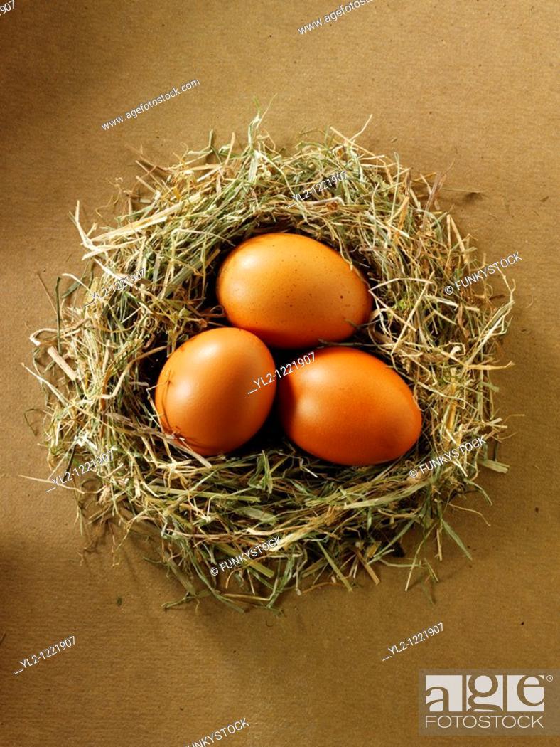 Stock Photo: Fresh Burford Brown free range organic Eggs in a nest.