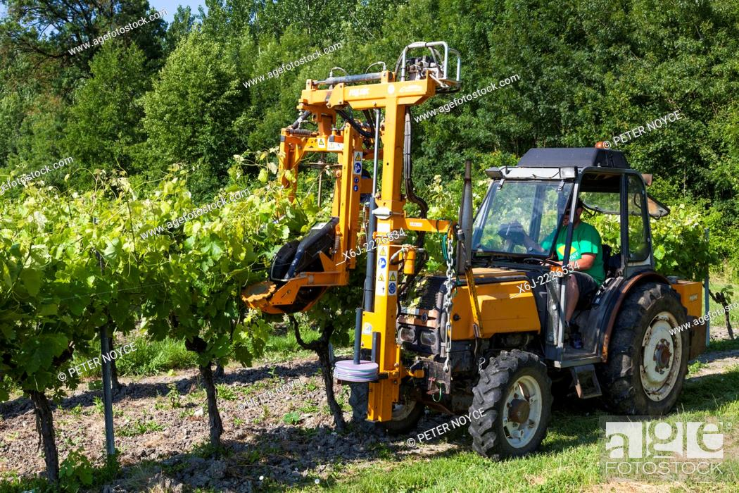 Stock Photo: Tractor raising branches of rows of grape vines with lifting wire.