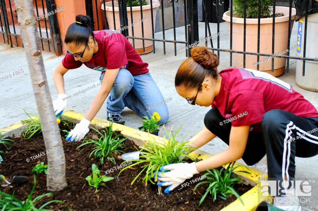Stock Photo: Hispanic community service volunteers of the Harlem Spanish Manhattan Seventh Day Adventist Church plant flowers in an East Harlem neighborhood public sidewalk.