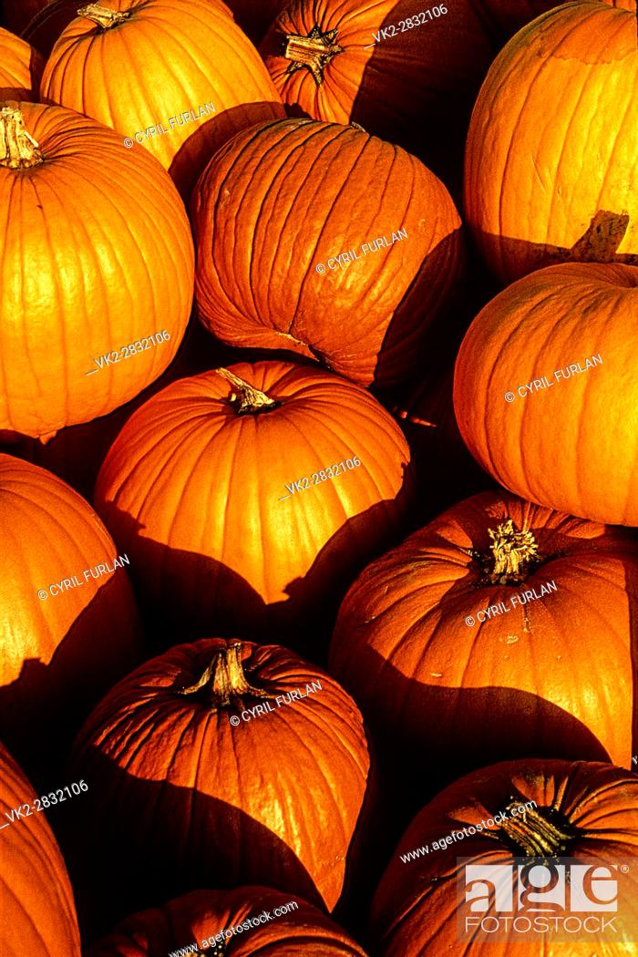 Stock Photo: Pumpkins on display at a farmers market in.