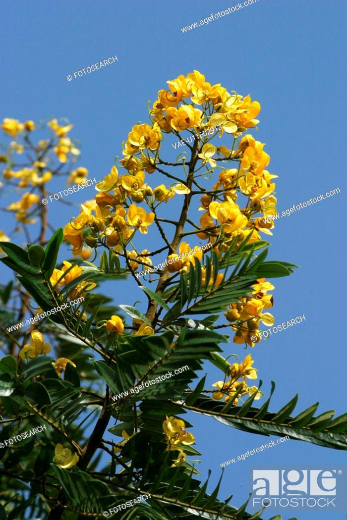 Stock Photo: plant, plant life, flora, growth, green, environment.