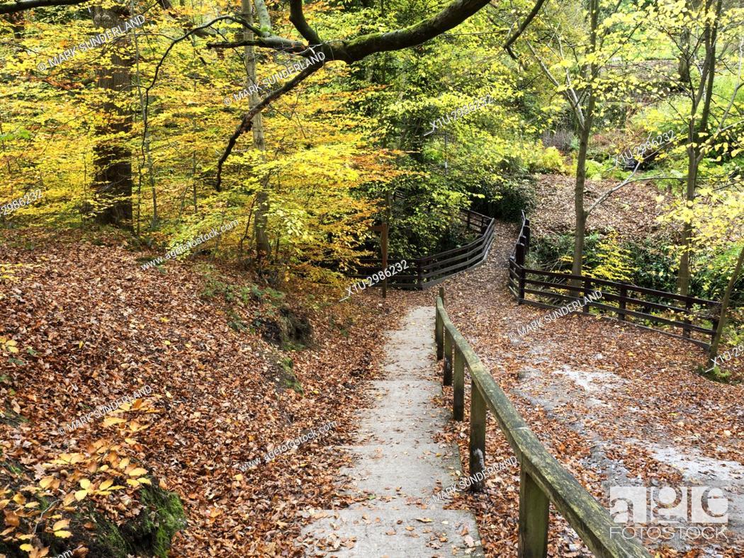 Stock Photo: Autumn Colours in Goitsock Wood at Hallas Bridge near Cullingworth West Yorkshire England.
