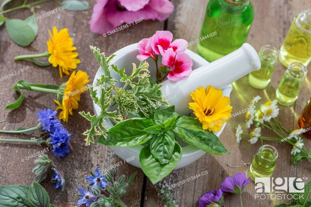 Stock Photo: essential oils for aromatherapy treatment with fresh herbs in mortar, and essential oik bottle on the back on bleue wooden board background.