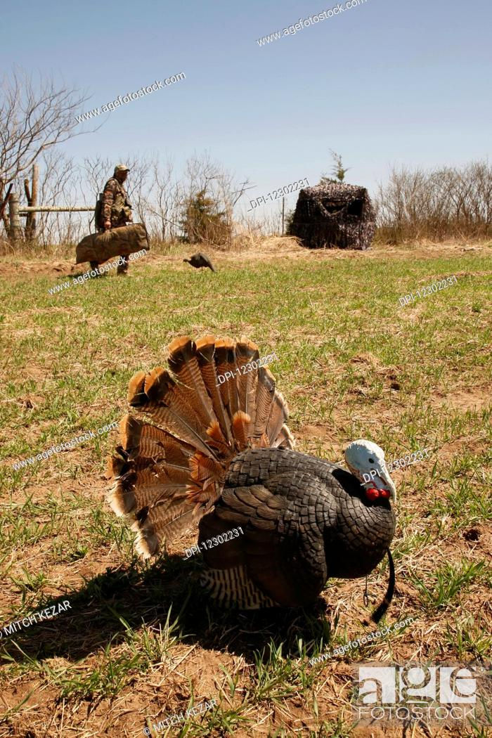 Stock Photo: Turkey In Foreground and Turkey Hunters In Background.