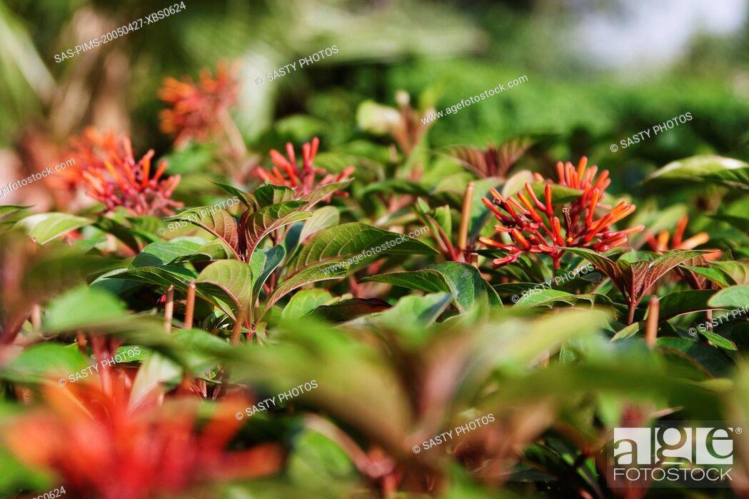 Stock Photo: Flowers in a garden, Garden of Five Senses, Saidul Ajaib, New Delhi, India.