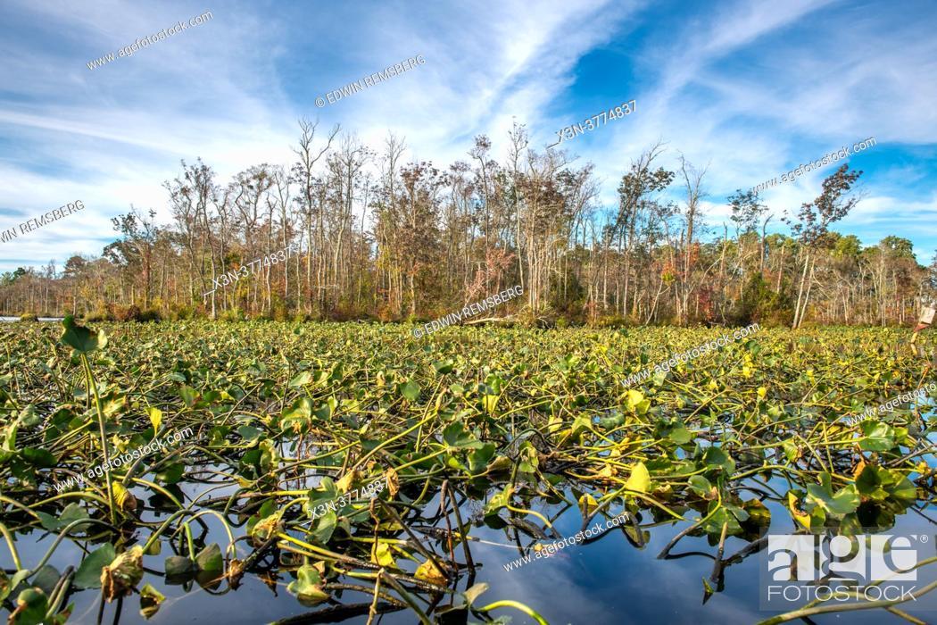 Stock Photo: Chicamacomico River - Eastern Shore Maryland.