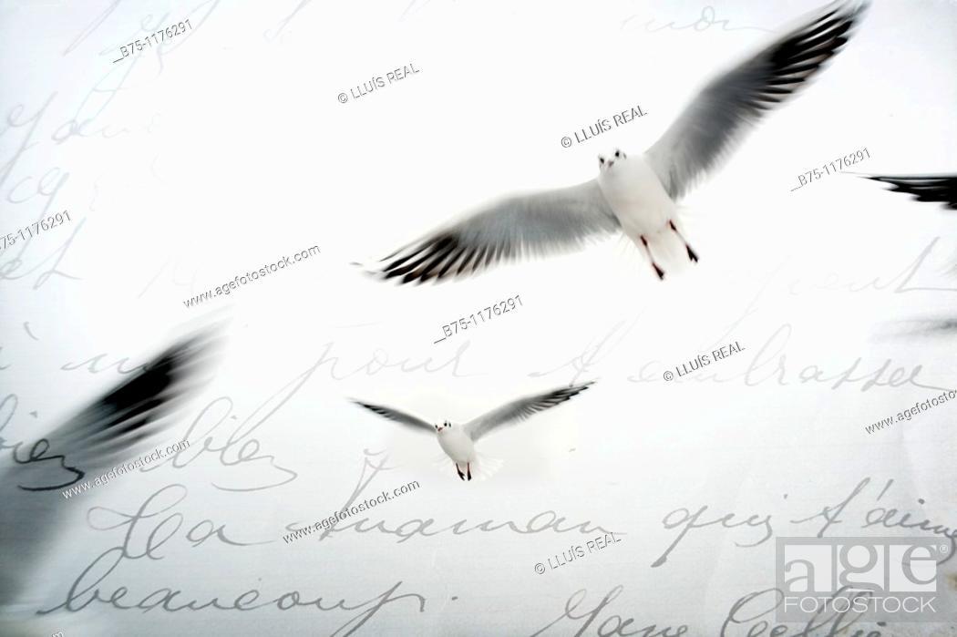 Stock Photo: Letter, birds.