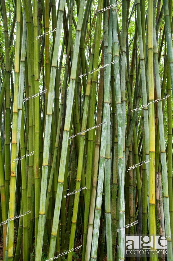 Stock Photo: Bamboo.