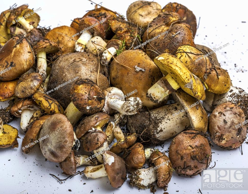 Stock Photo: fresh edible forest mushrooms on a white background, Suillus luteus and Boletus edulis, top view.
