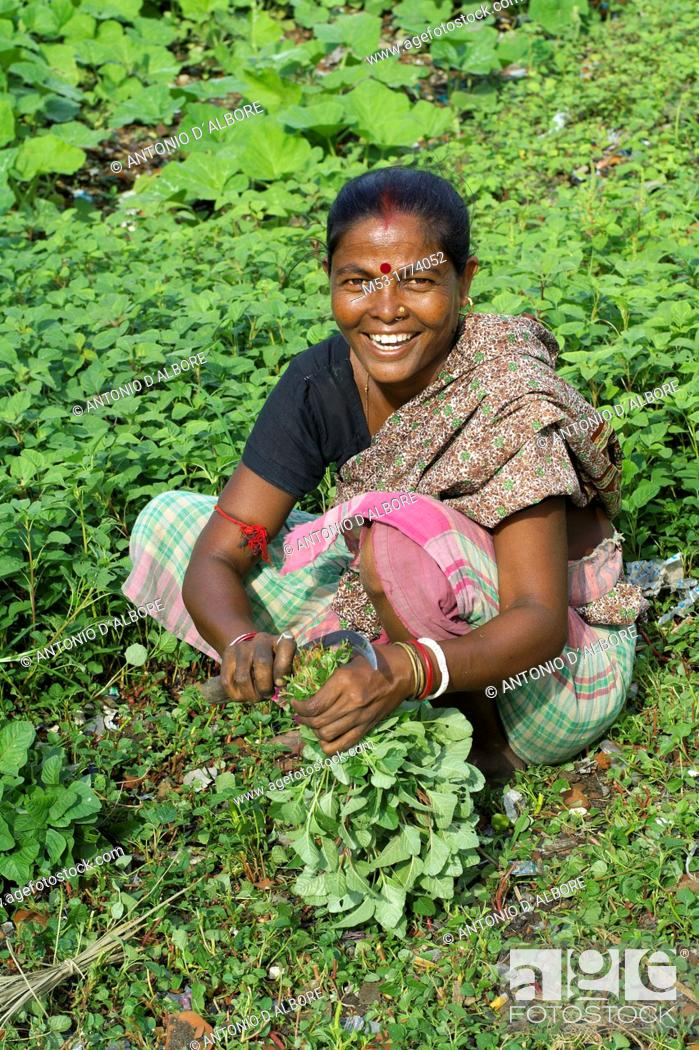Stock Photo: an indian woman cut the stems of a bunch of vegetable in dhapa district  kolkata  west bengal  india.