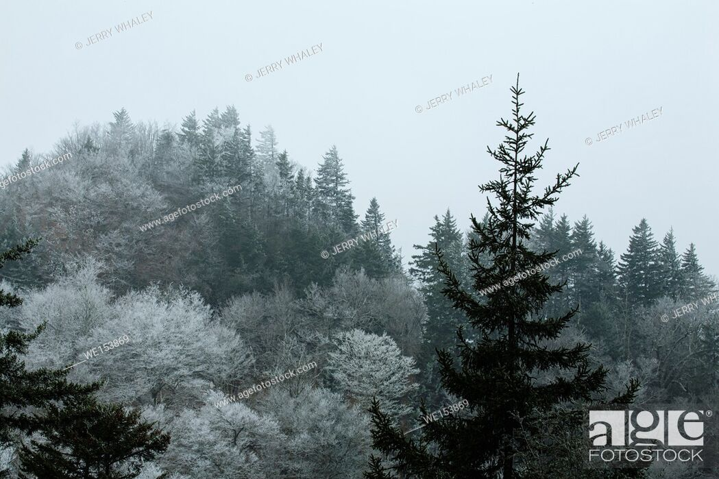 Stock Photo: Frosty Morning on Newfound Gap Road, Great Smoky Mtns National Park.