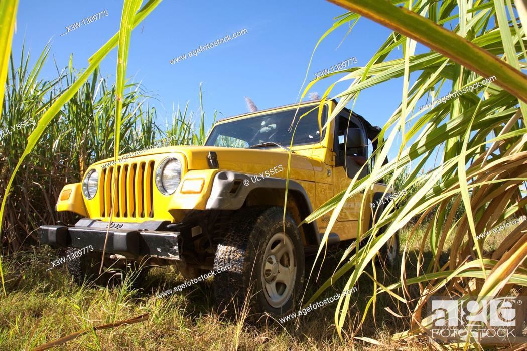 Stock Photo: america, caribbean sea, hispaniola island, dominican republic, area of higuey, sugar cane plantation, off-road car.