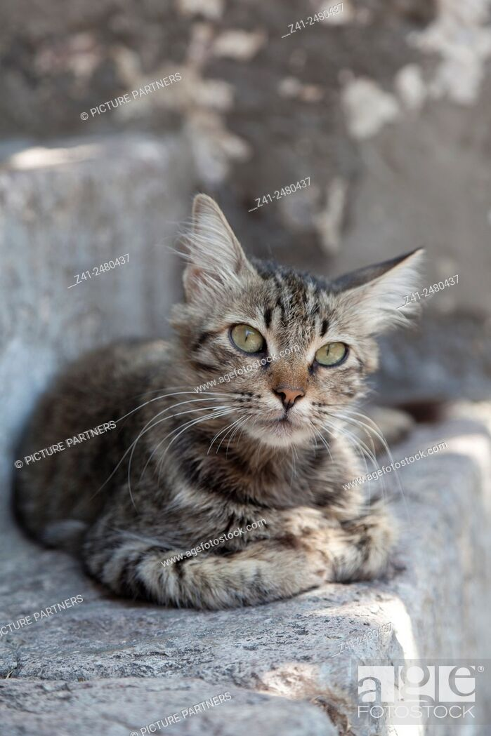 Stock Photo: Lovely tabby cat outside on a stone wall.