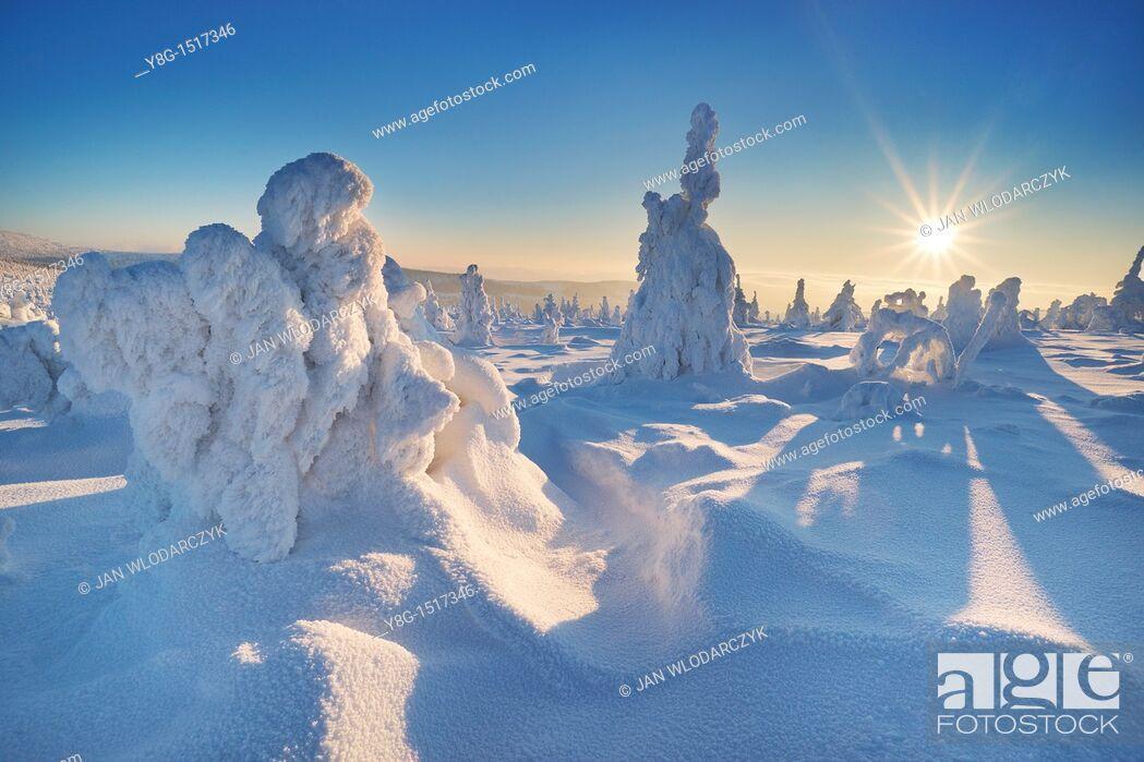 Stock Photo: Snowy trees at the Szrenica peak, Karkonosze National Park, Poland, Europe.