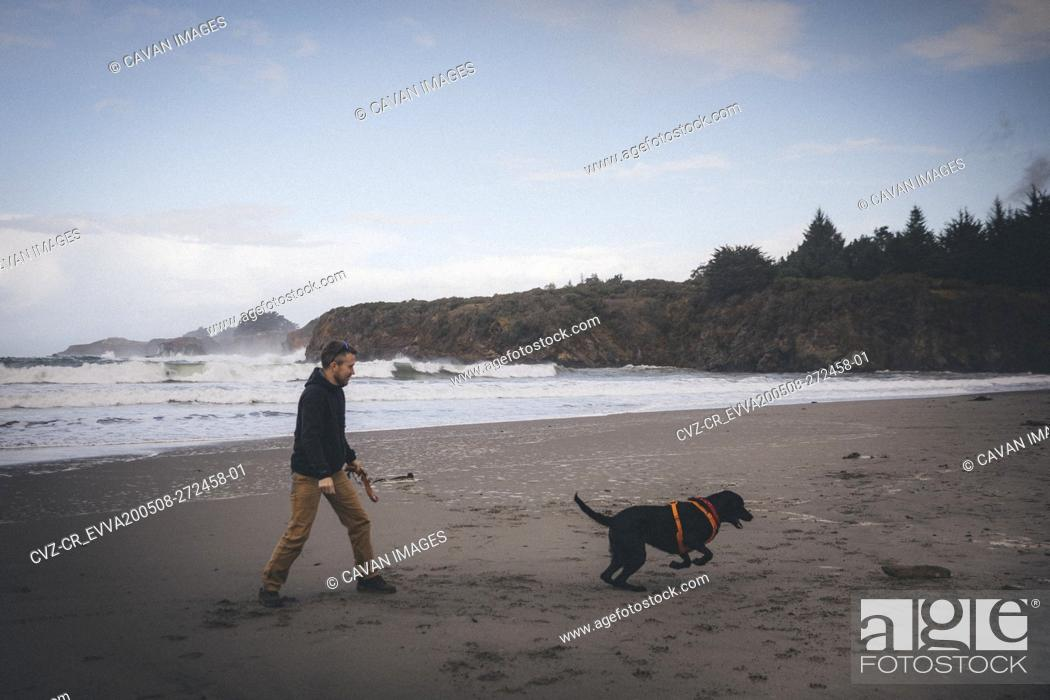 Stock Photo: A man is playing with a dog on the Californian beach.