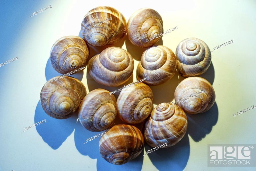 Imagen: Snail Shells.