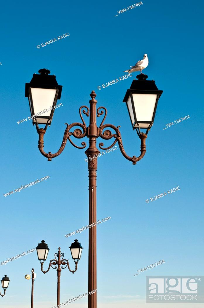 Stock Photo: Seagull standing on lamppost, Saintes-Maries-de-la-Mer, Southern France.