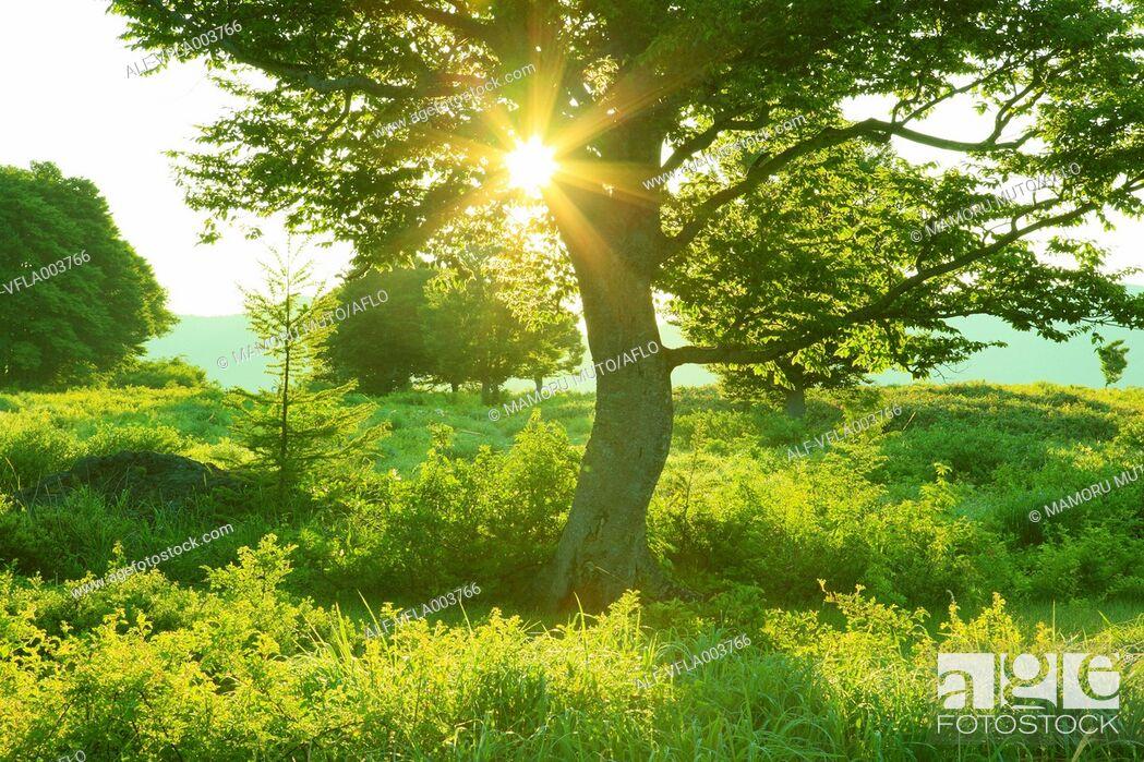Stock Photo: Aomori Prefecture, Japan.