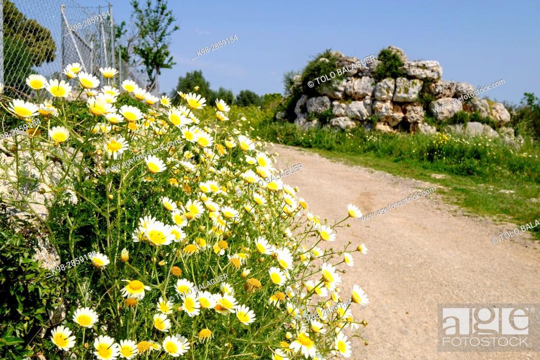 Stock Photo: Talaiot des Racons, monumento arqueologico, Llubi, Mallorca, balearic islands, spain, europe.