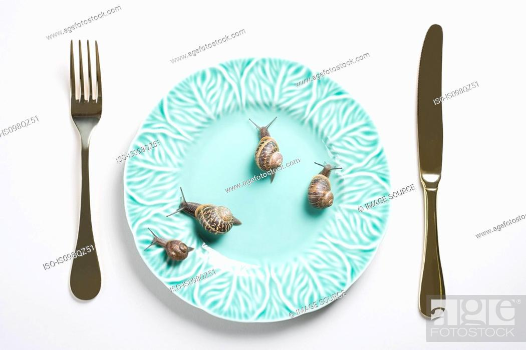 Stock Photo: Four snails on a plate.