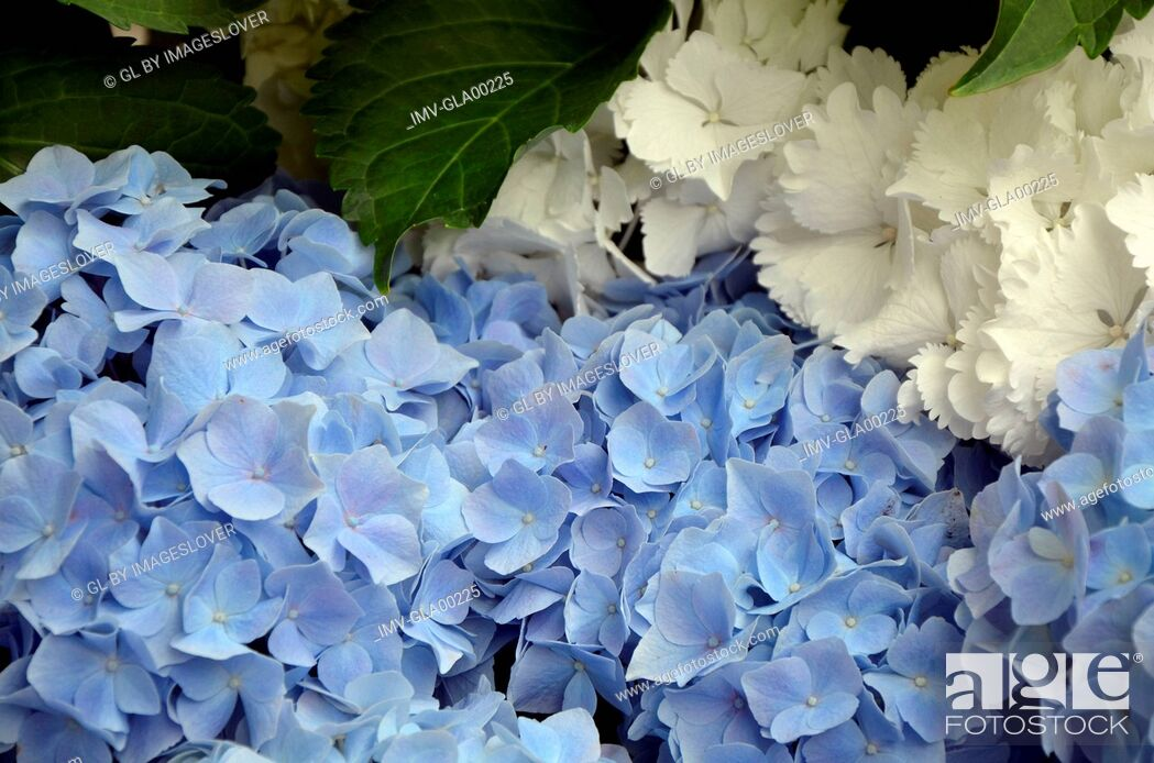 Imagen: Flowers on Garden.