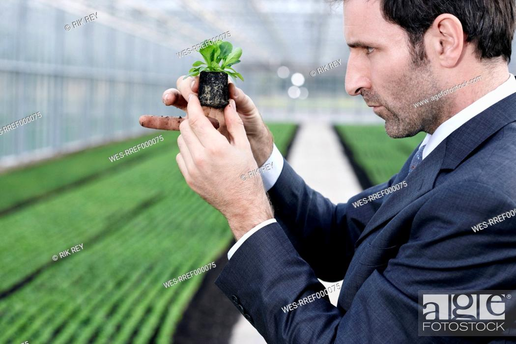 Stock Photo: Germany, Bavaria, Munich, Mature man in greenhouse with corn salad.