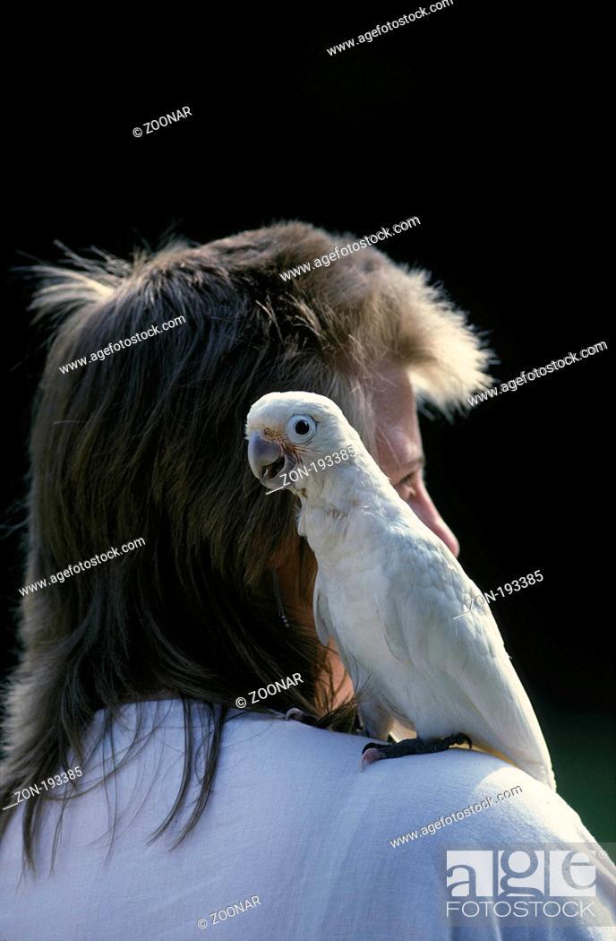 goffin kakadu