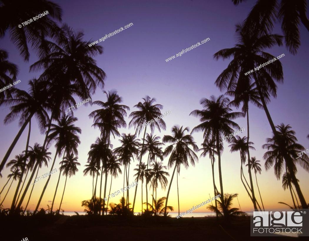 Stock Photo: Caribbean, Nevis, Pinney's Beach, sunset,.