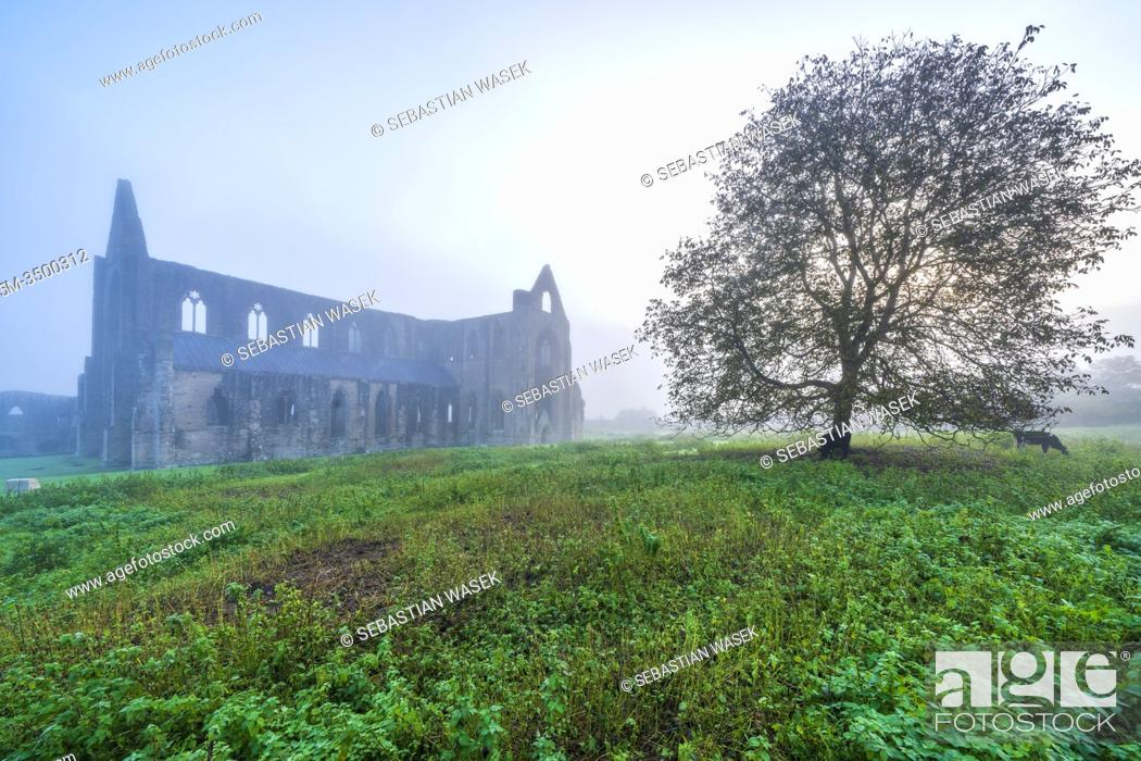 Stock Photo: The ruins of the XII century Cistercian Abbey of Tintern, in the Wye Valley, Wales, United Kingdom, Europe.