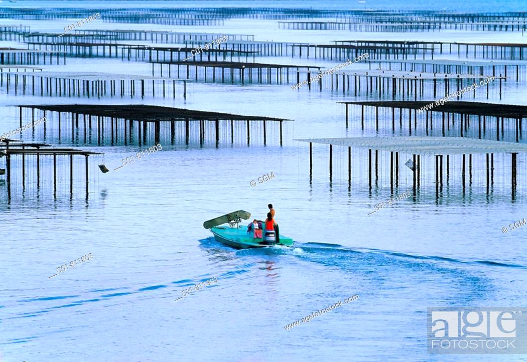Stock Photo: Oyster-farmers on boat sailing to oyster beds, Etang de Thau, Languedoc-Roussillon, France.