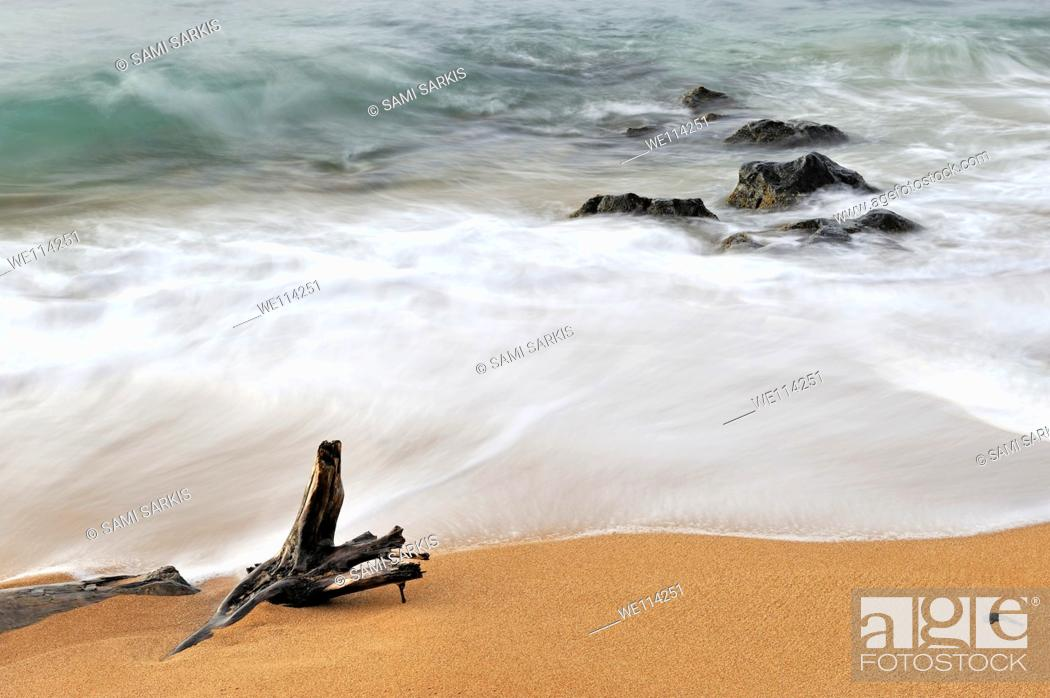 Stock Photo: Tree trunk and rocks partially submerged in sea at sunrise long exposure, Kauai Island, Hawaii Islands, Usa.