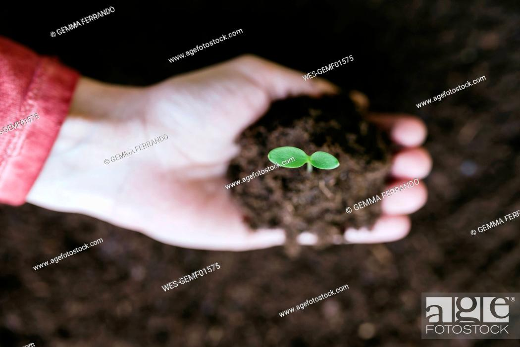 Stock Photo: Hand holding sprout with garden soil.