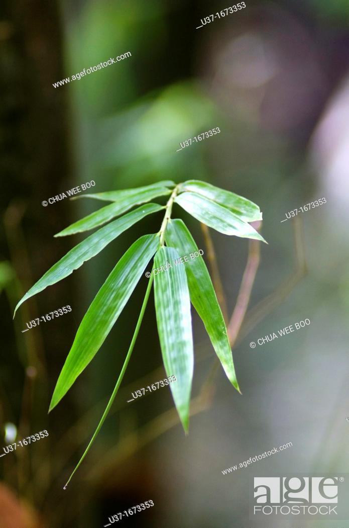 Stock Photo: Bamboo Garden in Semengoh Wildlife Centre, Sarawak, Malaysia.