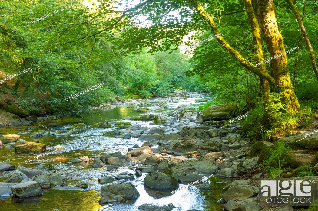 Stock Photo: The beautiful wooded valley of the River Barle is also worth exploring for its wildlife, as is the heathland of Winsford Hill.