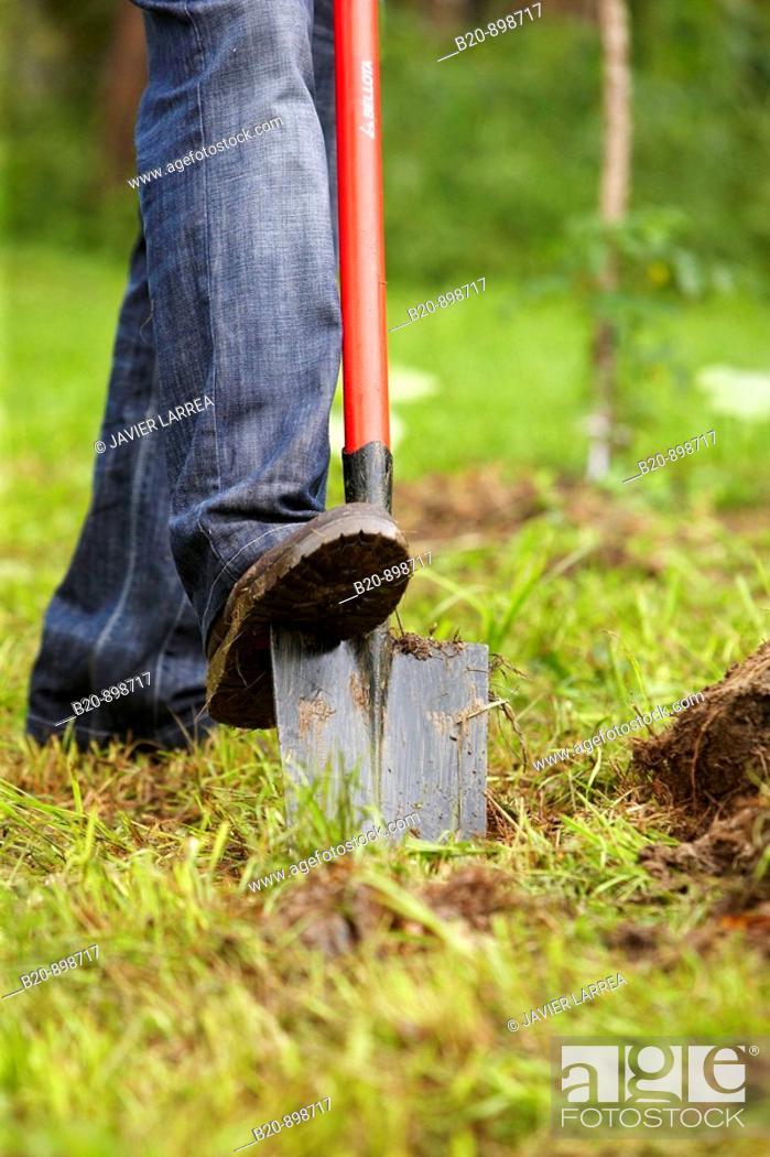 Stock Photo: Farmer digging with spade, hand tool, farming, Guipuzcoa, Basque Country, Spain.