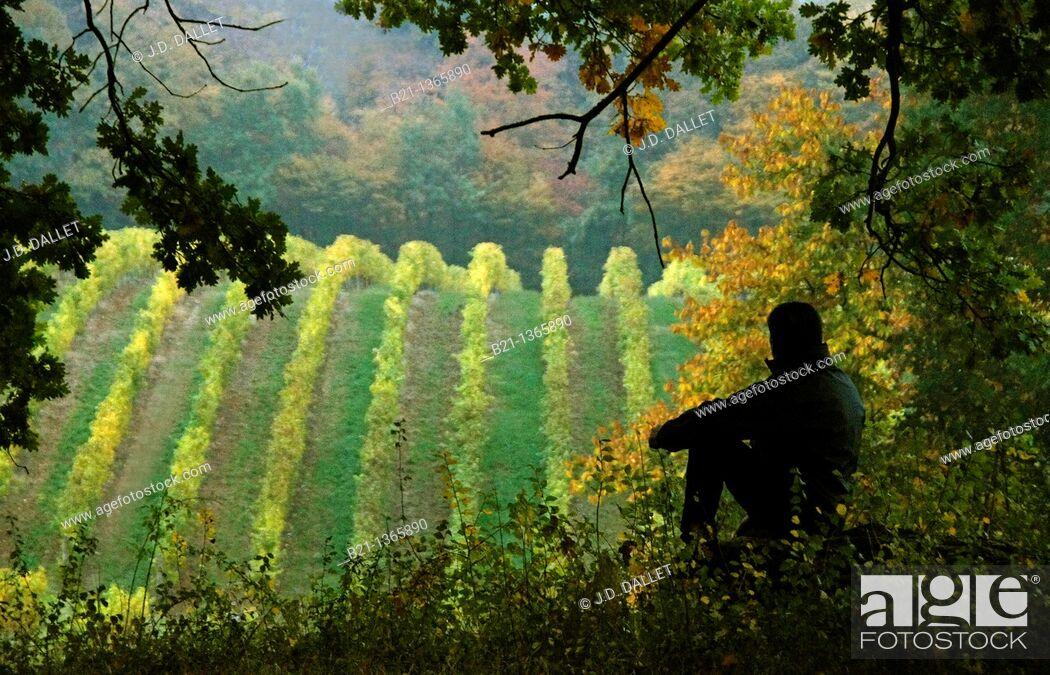 Stock Photo: Domaine de Joÿ vineyards in autumn, Armagnac Estate, Panjas, Gers, Midi-Pyrenees, France.