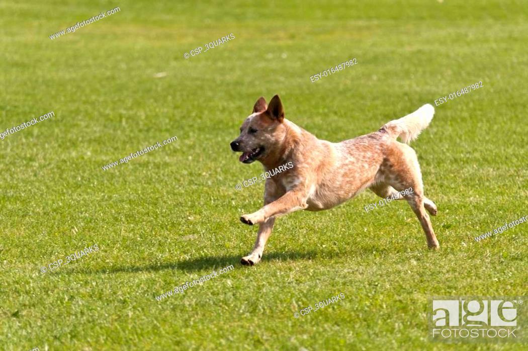 Stock Photo: Dog Race.