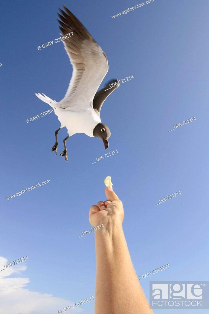Stock Photo: Birds.